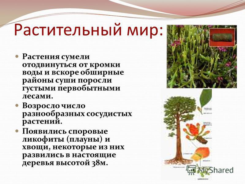 Растительный мир: Растения сумели отодвинуться от кромки воды и вскоре обширные районы суши поросли густыми первобытными лесами. Возросло число разнообразных сосудистых растений. Появились споровые гликофиты (плауны) и хвощи, некоторые из них развили