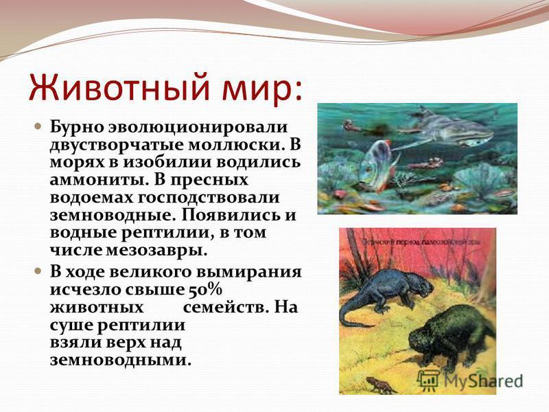 Животный мир: Бурно эволюционировали двустворчатые моллюски. В морях в изобилии водились аммониты. В пресных водоемах господствовали земноводные. Появились и водные рептилии, в том числе мезозавры. В ходе великого вымирания исчезло свыше 50% животных