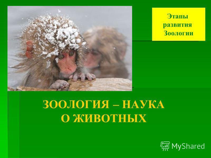 ЗООЛОГИЯ – НАУКА О ЖИВОТНЫХ Этапы развития Зоологии