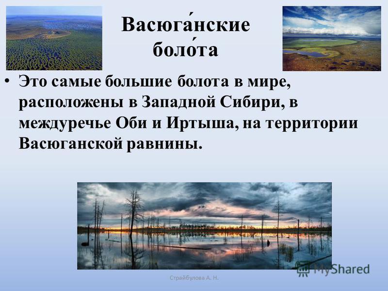 Васюга́женские поло́та Это самые большие полота в мире, расположены в Западной Сибири, в междуречье Оби и Иртыша, на территории Васюганской равнины. Страйбулова А. Н.