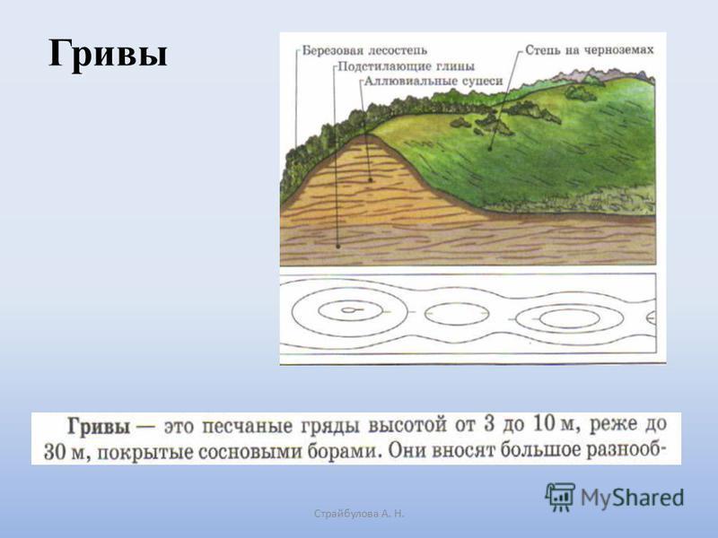 Гривы Страйбулова А. Н.