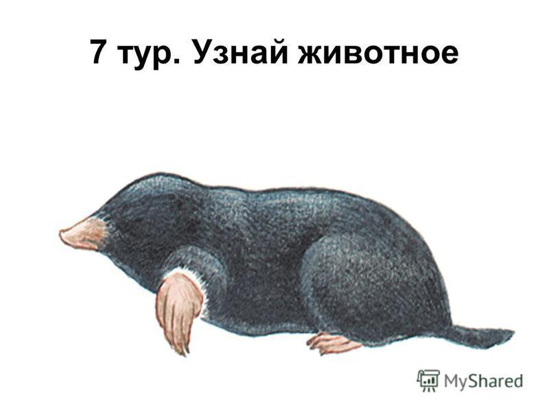 7 тур. Узнай животное