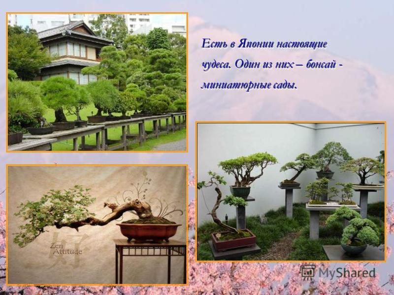 Есть в Японии настоящие чудеса. Один из них – бонсай - миниатюрные сады. Есть в Японии настоящие чудеса. Один из них – бонсай - миниатюрные сады.