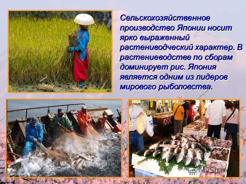 Сельскохозяйственное производство Японии носит ярко выраженный растениеводческий характер. В растениеводстве по сборам доминирует рис. Япония является одним из лидеров мирового рыболовства. Сельскохозяйственное производство Японии носит ярко выраженн