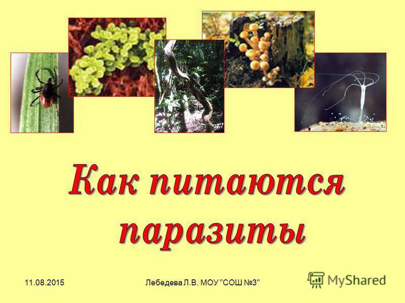 11.08.2015Лебедева Л.В. МОУ СОШ 3