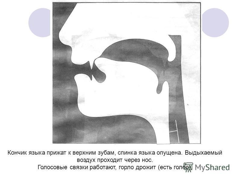 Кончик языка прижат к верхним зубам, спинка языка опущена. Выдыхаемый воздух проходит через нос. Голосовые связки работают, горло дрожит (есть голос).