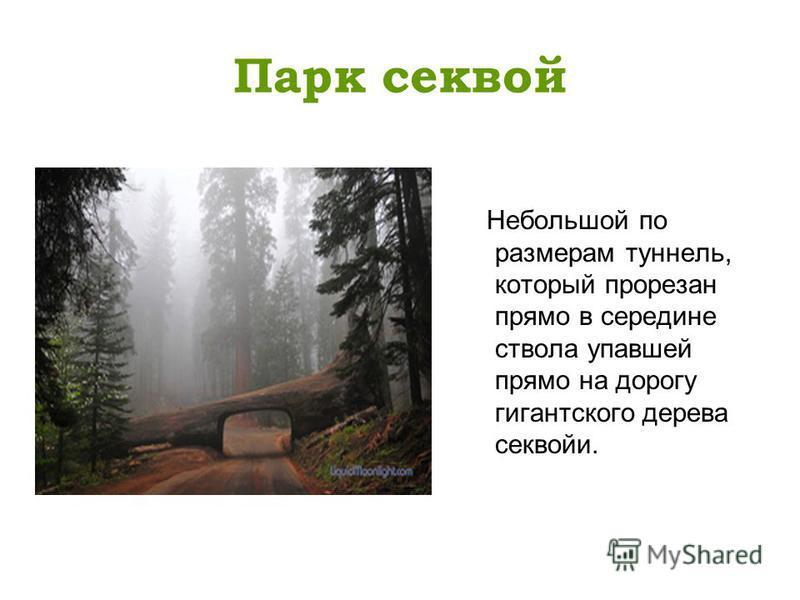 Парк секвой Небольшой по размерам туннель, который прорезан прямо в середине ствола упавшей прямо на дорогу гигантского дерева секвойи.