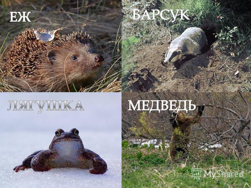 Животные тоже чувствуют приход весны и просыпаются после зимней спячки.
