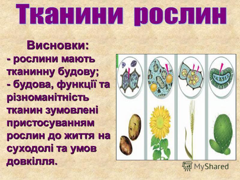 Висновки: - рослини мають тканинну будову; Висновки: - рослини мають тканинну будову; - будова, функції та різноманітність тканин зумовлені пристосуванням рослин до життя на суходолі та умов довкілля.
