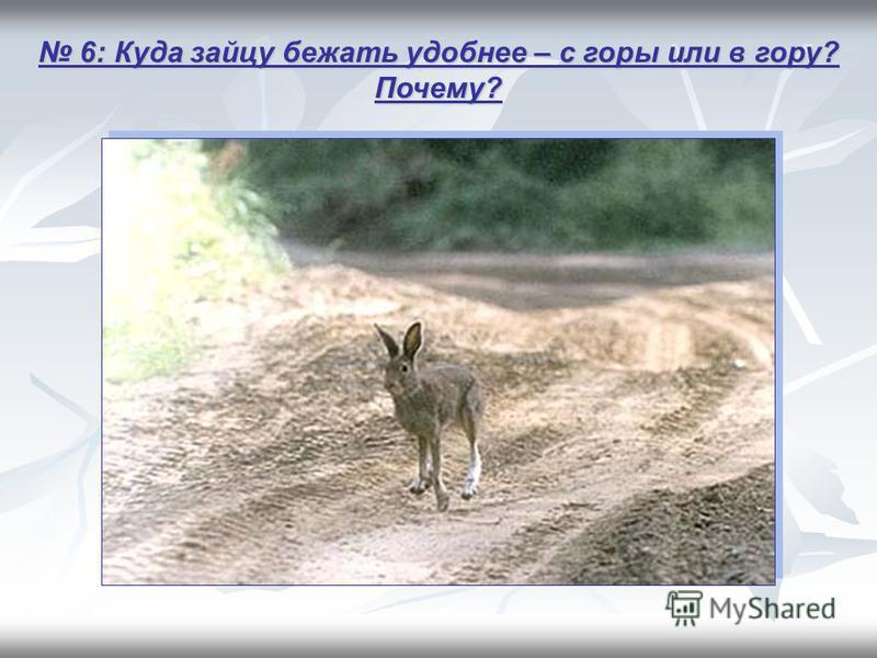 6: Куда зайцу бежать удобнее – с горы или в гору? Почему? 6: Куда зайцу бежать удобнее – с горы или в гору? Почему?
