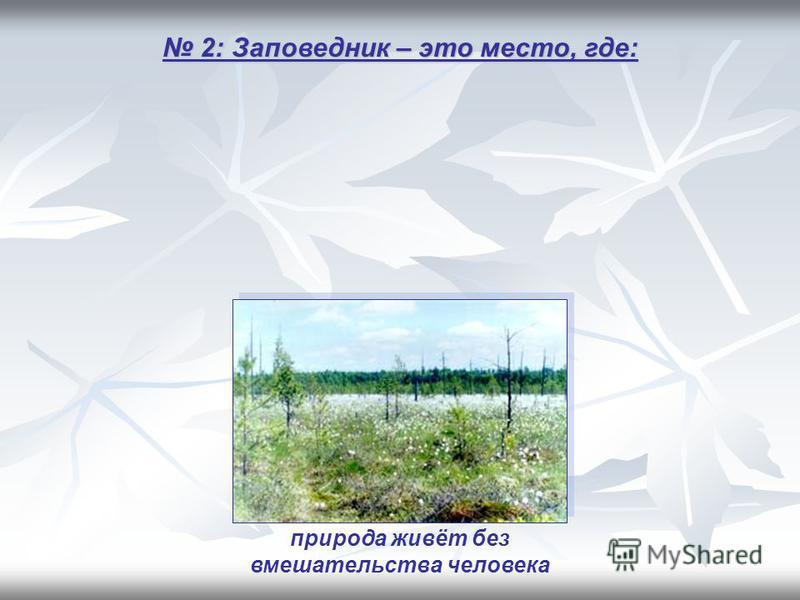 2: Заповедник – это место, где: 2: Заповедник – это место, где: природа живёт без вмешательства человека