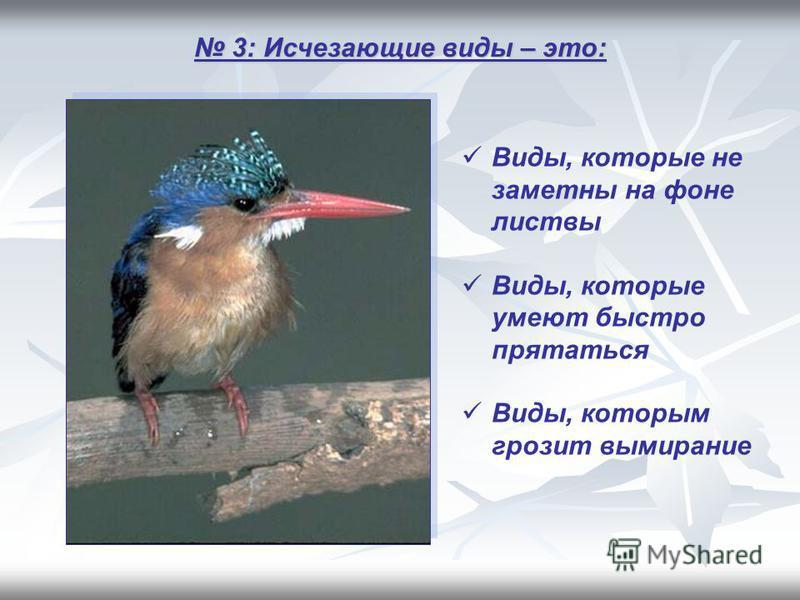 3: Исчезающие виды – это: 3: Исчезающие виды – это: Виды, которые не заметны на фоне листвы Виды, которые умеют быстро прятаться Виды, которым грозит вымирание