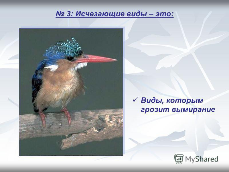 3: Исчезающие виды – это: 3: Исчезающие виды – это: Виды, которым грозит вымирание