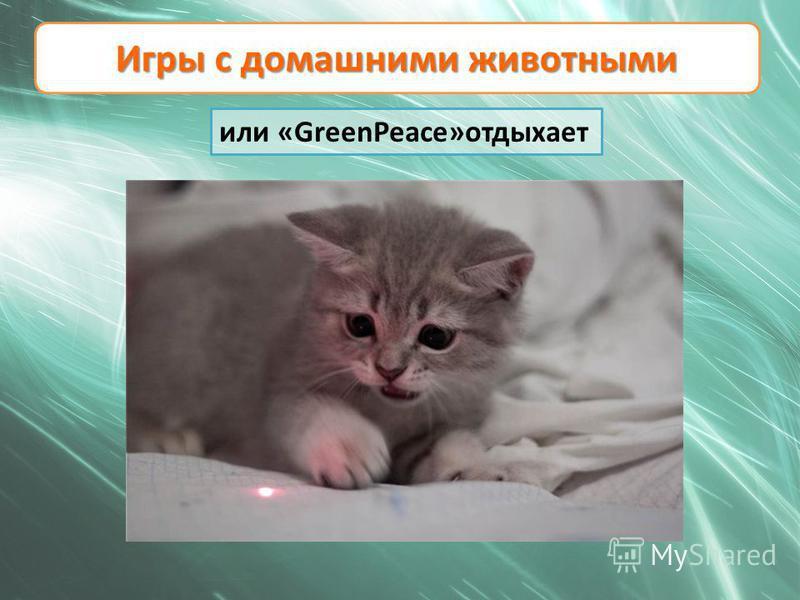 Игры с домашними животными или «GreenPeace»отдыхает