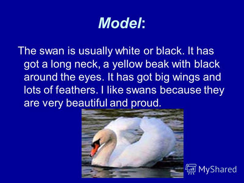 Model: The swan is usually white or black. It has got a long neck, a yellow beak with black around the eyes. It has got big wings and lots of feathers. I like swans because they are very beautiful and proud.