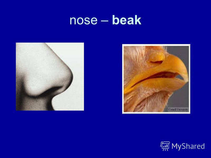 nose – beak