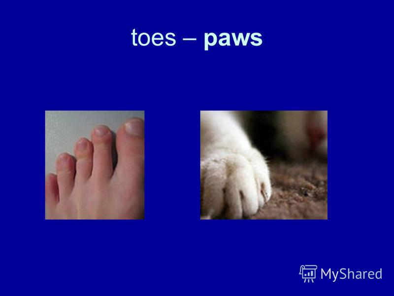 toes – paws