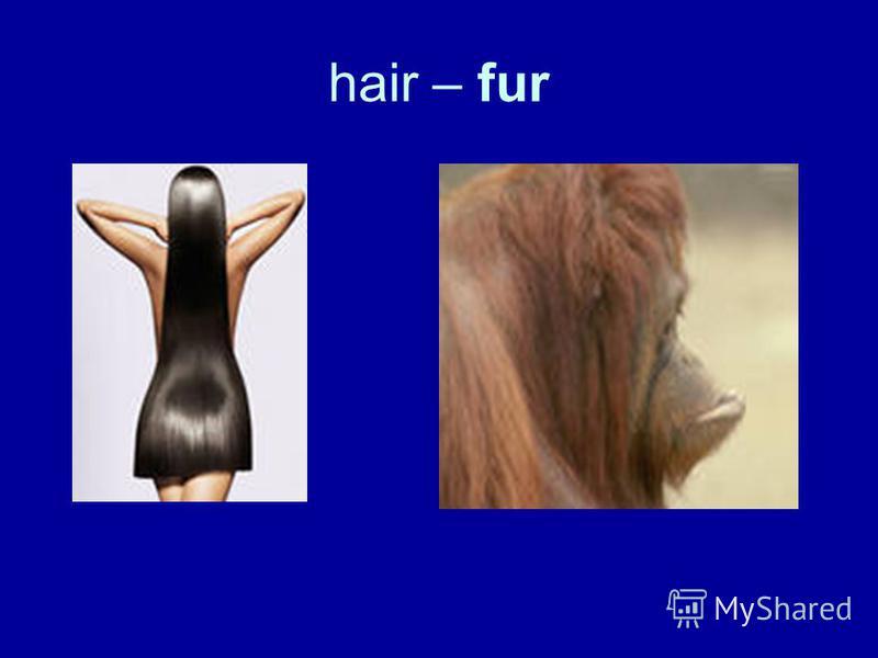 hair – fur
