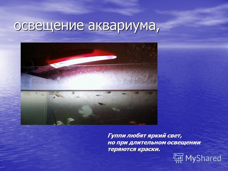 освещение аквариума, Гуппи любят яркий свет, но при длительном освещении теряются краски.