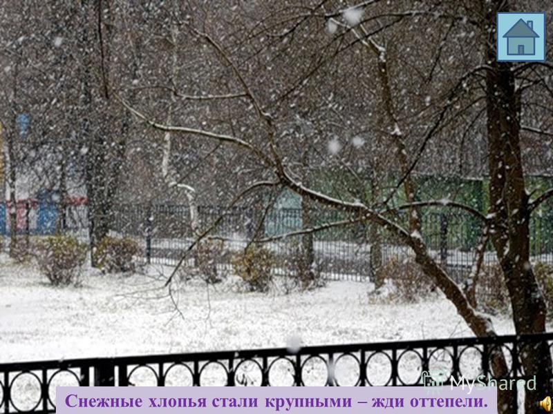 Снегирь поёт зимой на снег, вьюгу и слякоть.