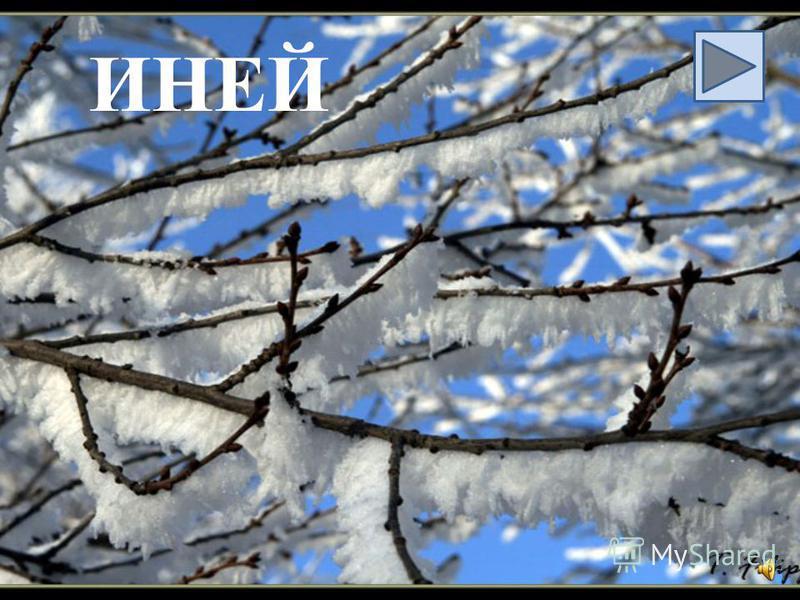Не снег, не лёд, а серебром деревья уберёт.