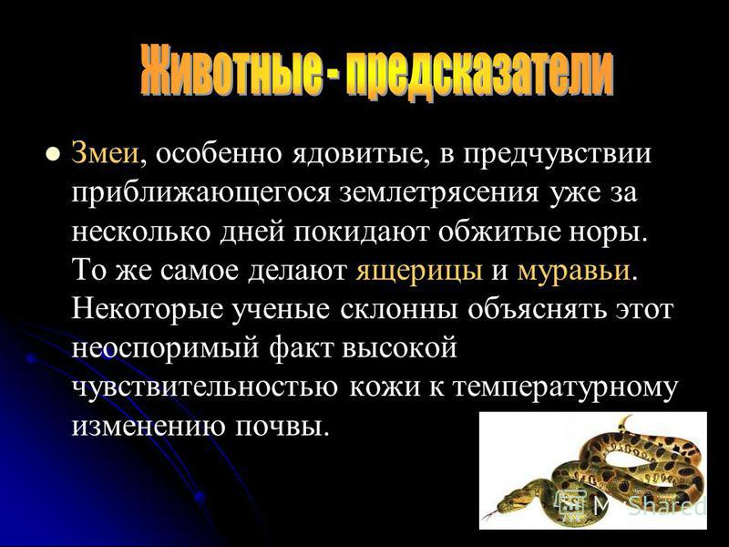 Змеи, особенно ядовитые, в предчувствии приближающегося землетрясения уже за несколько дней покидают обжитые норы. То же самое делают ящерицы и муравьи. Некоторые ученые склонны объяснять этот неоспоримый факт высокой чувствительностью кожи к темпера