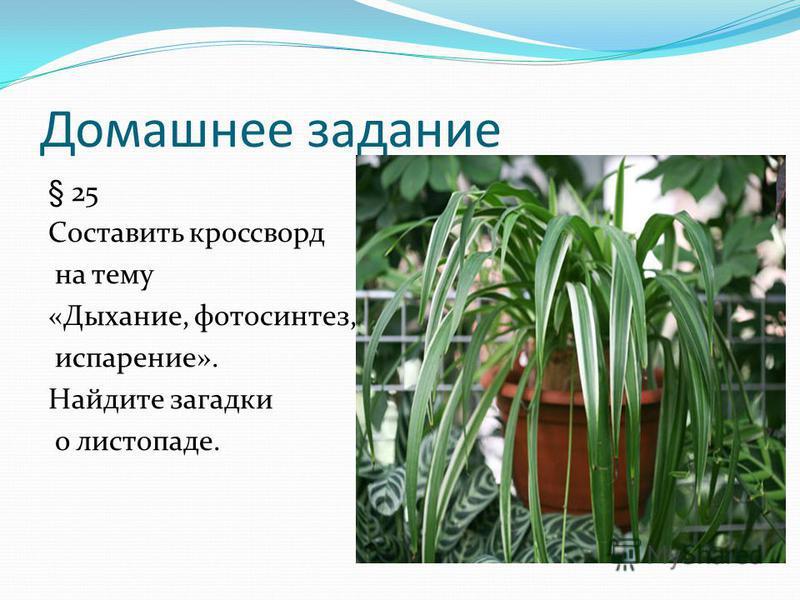 Домашнее задание § 25 Составить кроссворд на тему «Дыхание, фотосинтез, испарение». Найдите загадки о листопаде.