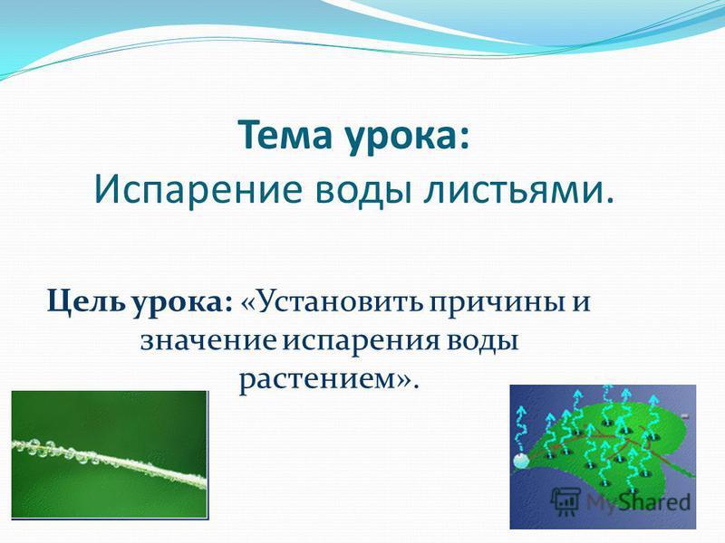 Тема урока: Испарение воды листьями. Цель урока: «Установить причины и значение испарения воды растением».