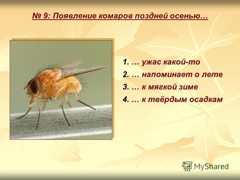 9: Появление комаров поздней осенью… 1.… ужас какой-то 2.… напоминает о лете 3.… к мягкой зиме 4.… к твёрдым осадкам