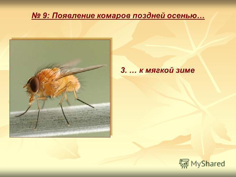 9: Появление комаров поздней осенью… 3. … к мягкой зиме