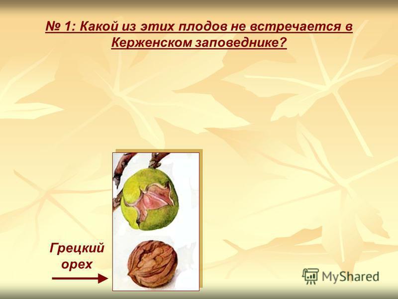 1: Какой из этих плодов не встречается в Керженском заповеднике? Грецкий орех