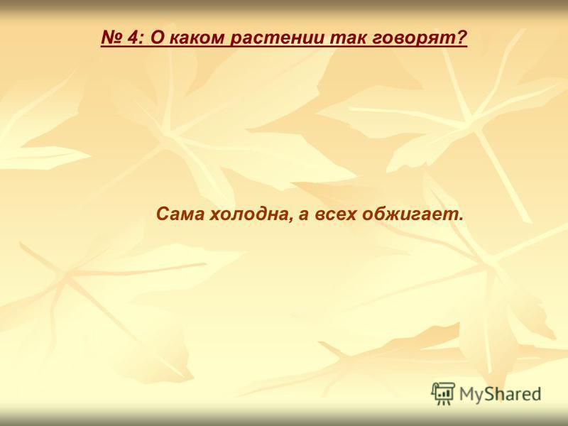 4: О каком растении так говорят? Сама холодна, а всех обжигает.