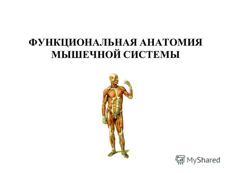 ФУНКЦИОНАЛЬНАЯ АНАТОМИЯ МЫШЕЧНОЙ СИСТЕМЫ