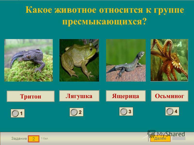 Далее 2 Задание 1 бал. 1111 2222 3333 4444 Какое животное относится к группе пресмыкающихся? Тритон Лягушка ЯщерицаОсьминог