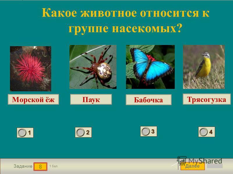 Далее 8 Задание 1 бал. 1111 2222 3333 4444 Какое животное относится к группе насекомых? Морской ёж Трясогузка Паук Бабочка