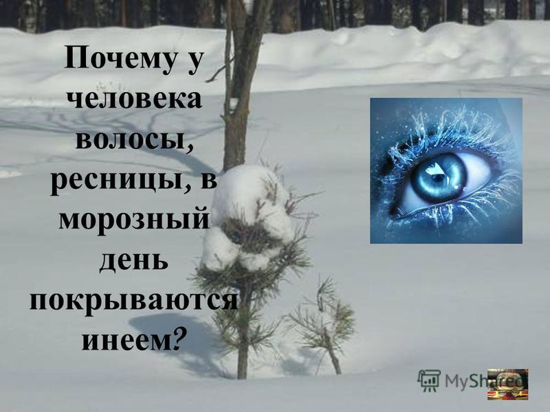 Почему у человека волосы, ресницы, в морозный день покрываются инеем ?