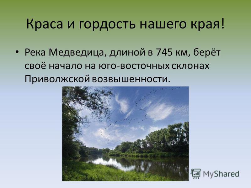 Краса и гордость нашего края! Река Медведица, длиной в 745 км, берёт своё начало на юго-восточных склонах Приволжской возвышенности.