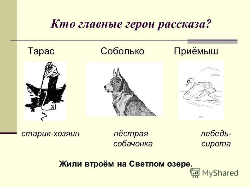 Кто главные герои рассказа? Тарас Соболько Приёмыш старик-хозяин пёстрая лебедь- собачонка сирота Жили втроём на Светлом озере.