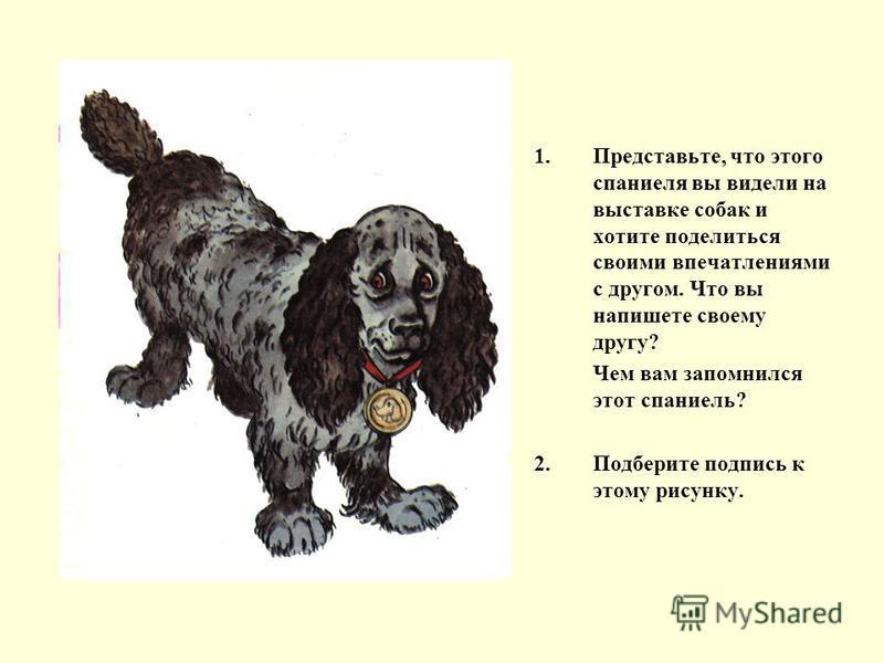 1.Представьте, что этого спаниеля вы видели на выставке собак и хотите поделиться своими впечатлениями с другом. Что вы напишете своему другу? Чем вам запомнился этот спаниель? 2. Подберите подпись к этому рисунку.
