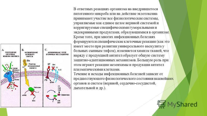 В ответных реакциях организма на внедрившегося патогенного микроба или на действие экзотоксина принимают участие все физиологические системы, управляемые как единое целое нервной системой и корригируемые специфическими гуморальными и эндокринными про