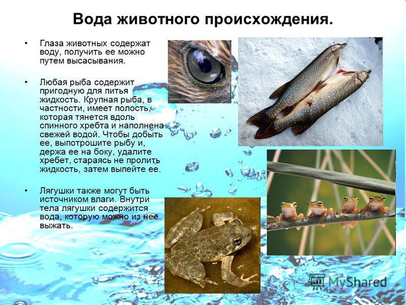 Вода животного происхождения. Глаза животных содержат воду, получить ее можно путем высасывания. Любая рыба содержит пригодную для питья жидкость. Крупная рыба, в частности, имеет полость, которая тянется вдоль спинного хребта и наполнена свежей водо