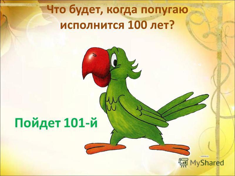 Что будет, когда попугаю исполнится 100 лет? Пойдет 101-й