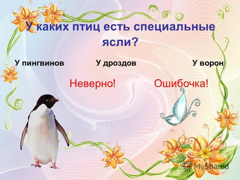 У каких птиц есть специальные ясли? Неверно! У пингвиновУ дроздовУ ворон Ошибочка!