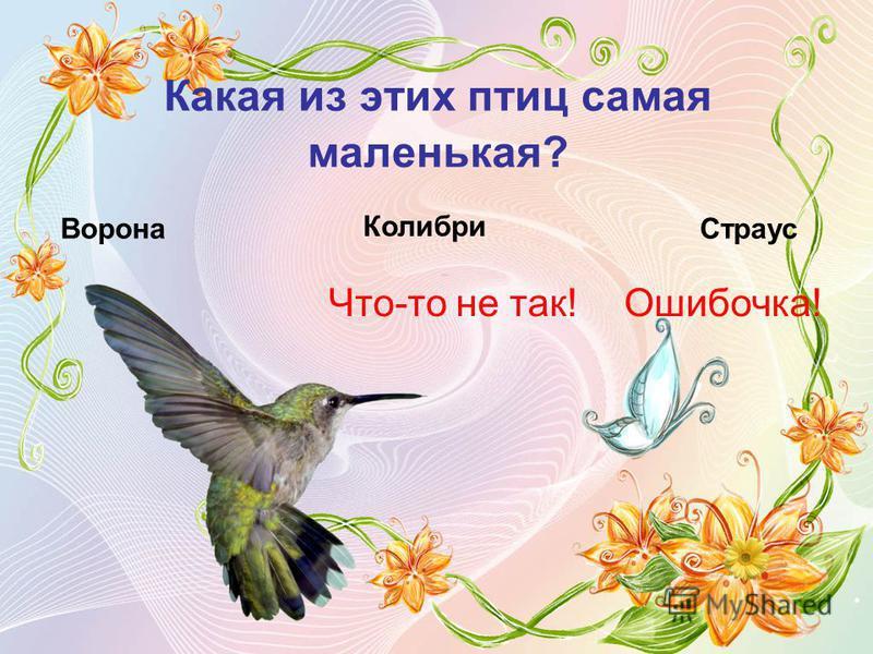 Какая из этих птиц самая маленькая? Ворона Что-то не так! Колибри Страус Ошибочка!