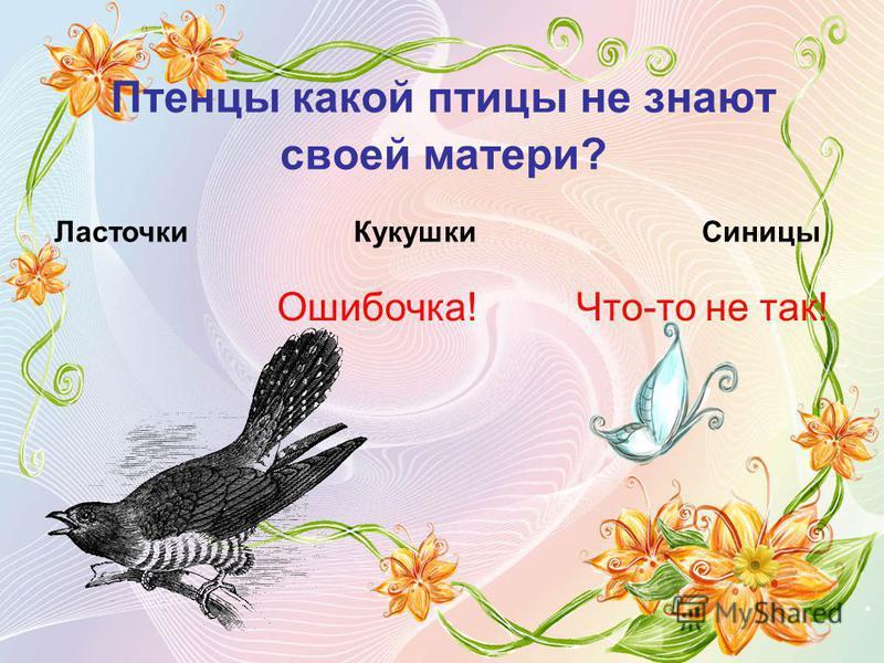 Птенцы какой птицы не знают своей матери? Ласточки Кукушки Ошибочка! Синицы Что-то не так!