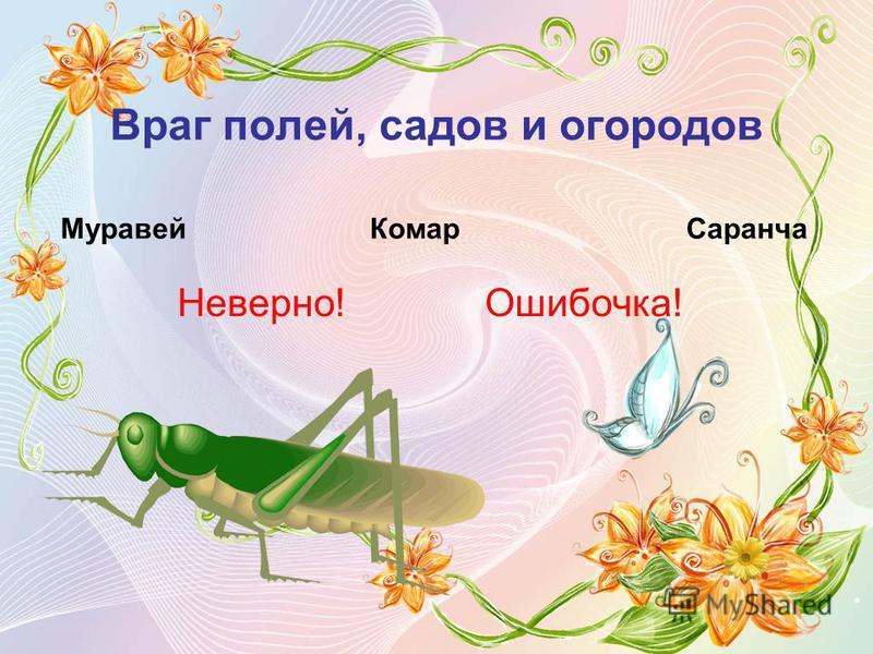 Враг полей, садов и огородов Муравей КомарСаранча Неверно!Ошибочка!