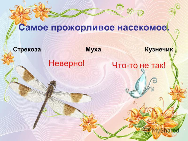 Самое прожорливое насекомое. Стрекоза МухаКузнечик Неверно! Что-то не так!