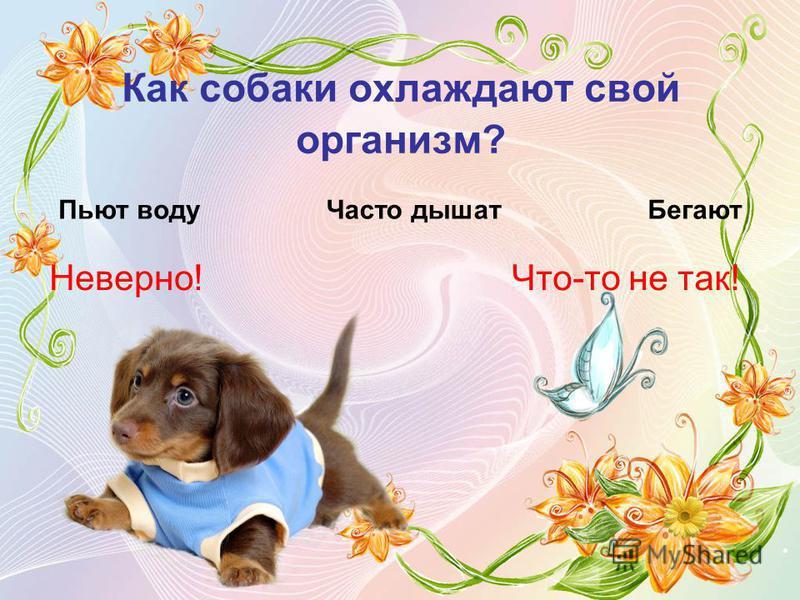 Как собаки охлаждают свой организм? Пьют воду Часто дышат Бегают Неверно!Что-то не так!