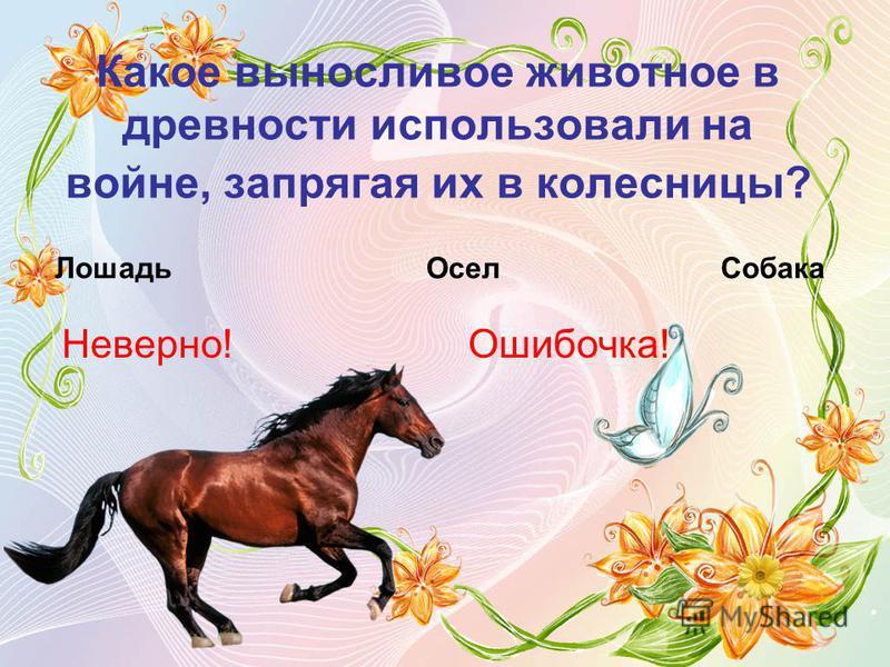 Какое выносливое животное в древности использовали на войне, запрягая их в колесницы? Лошадь ОселСобака Неверно!Ошибочка!