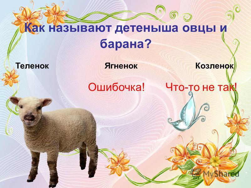 Как называют детеныша овцы и барана? Теленок ЯгненокКозленок Ошибочка!Что-то не так!